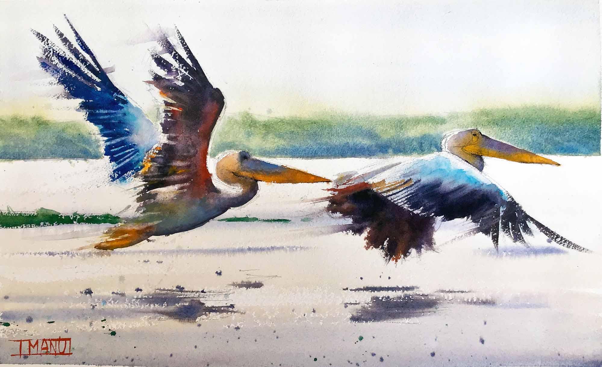Pelicans emmanuele cammarano fine artist watercolorist acquerellista